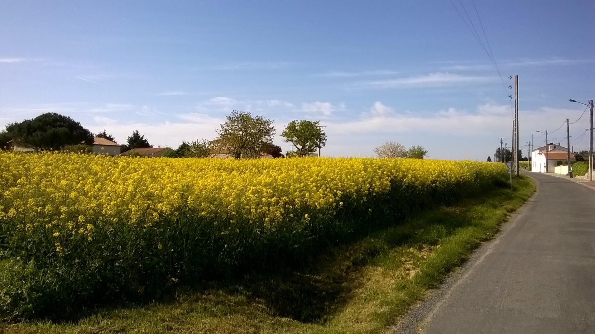 Le Chay